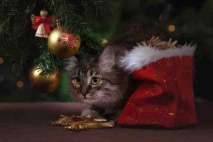 Következő Oriflame katalógus – ajándéktippek szeretteidnek Karácsonyra